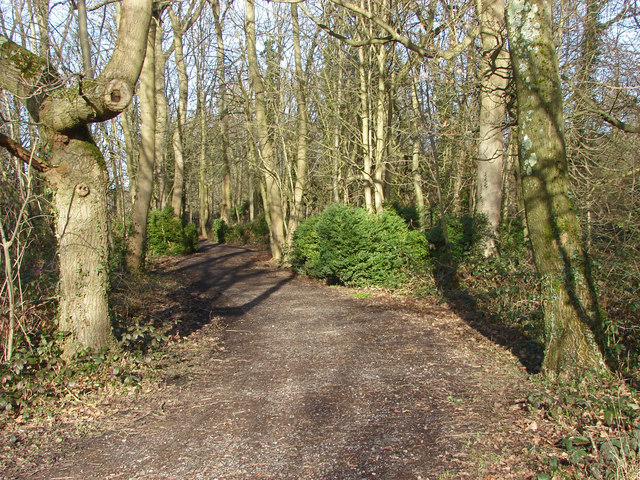 Woods by the River Colne