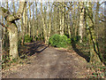 TQ0586 : Woods by the River Colne by Alan Hunt