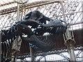 SP5106 : T.rex head by Bill Nicholls