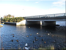 J3731 : Ducks below the Shimna Road bridge over the Tullybranigan River by Eric Jones
