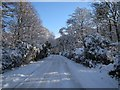 NZ2570 : Snow in Gosforth Park, Newcastle by Andrew Tryon