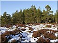 NJ0220 : Forest clearing, Culstank Moss by Craig Wallace