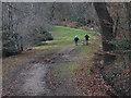 SU9669 : Woodland ride, Windsor Great Park by Alan Hunt