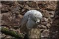 SD1096 : Snowy Owl, Muncaster Castle Owl Centre, Cumbria by Christine Matthews