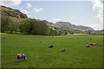 NY2101 : Sheep near Road to Hardknott Pass, Cumbria by Christine Matthews
