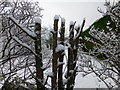 H4672 : Snow on branches, Omagh by Kenneth  Allen