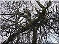 SK2099 : Langsett tree puzzle by Steve  Fareham
