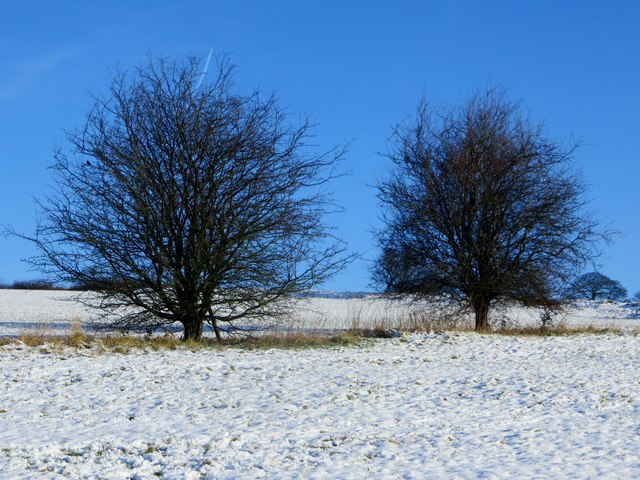 Trees in their winter garb