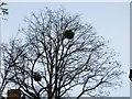 SP5106 : Mistletoe in the Trees by Bill Nicholls