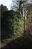 SJ3554 : Well used footpath by Geoff Evans