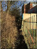 SJ8545 : Footpath boundary behind Royal Stoke University Hospital by Jonathan Hutchins