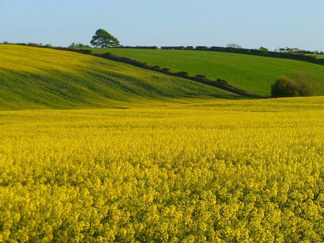 Farmland, Crosscanonby