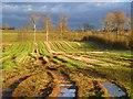 NY2747 : Farmland, Westward by Andrew Smith