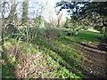 TQ2987 : Sunnyside Community Gardens by Marathon