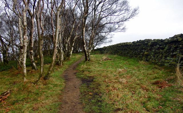 Arncliffe Wood