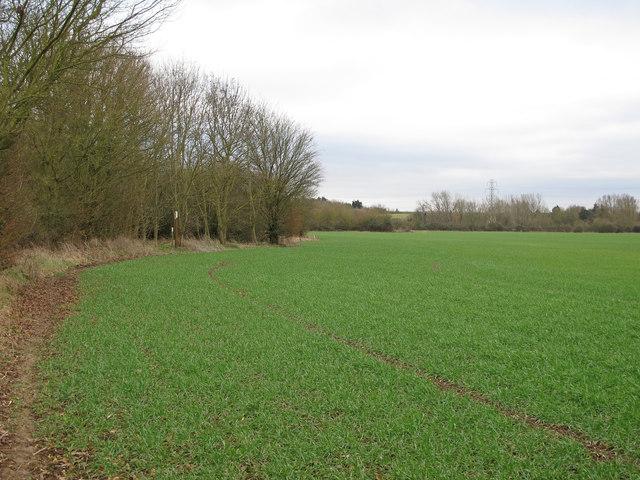 Public footpath on arable land, West Hanningfield