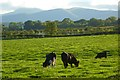 NY4140 : Pasture, Skelton by Andrew Smith