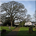 TL6357 : In Dullingham churchyard by John Sutton