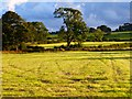 NY4336 : Farmland, Skelton by Andrew Smith