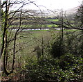 SO5305 : Wye viewed from a hillside near Whitebrook by Jaggery