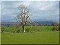 NY4639 : Farmland, Calthwaite, Hesket by Andrew Smith