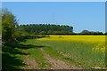 NY4739 : Farmland, Calthwaite, Hesket by Andrew Smith