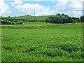 NY5036 : Farmland, Plumpton, Hesket by Andrew Smith