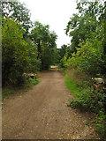TQ1673 : Thames Path by Matthew Chadwick