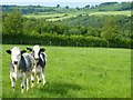 NY5241 : Pasture, Lazonby by Andrew Smith