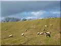 NY5447 : Farmland, Cumwhitton by Andrew Smith