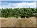 NY5633 : Farmland, Edenhall, Langwathby by Andrew Smith