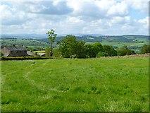 NY5636 : Pasture, Hunsonby by Andrew Smith