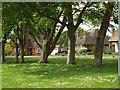 TQ4800 : Through the trees, Firle Close, Seaford by Robin Stott