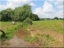 SO4449 : Drinking hole, Court Farm by Richard Webb