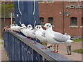 SX9192 : Birds in a row - Exeter by Chris Allen