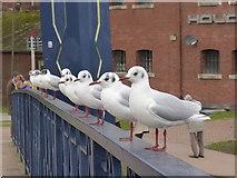 SX9192 : Birds in a row - Exeter by Chris Allen