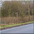 TL7502 : Footpath signpost, East Hanningfield Road, near Butt's Green by Roger Jones