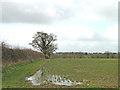 TM2086 : Near Hannah's Barn from Poppy Lane by Adrian S Pye