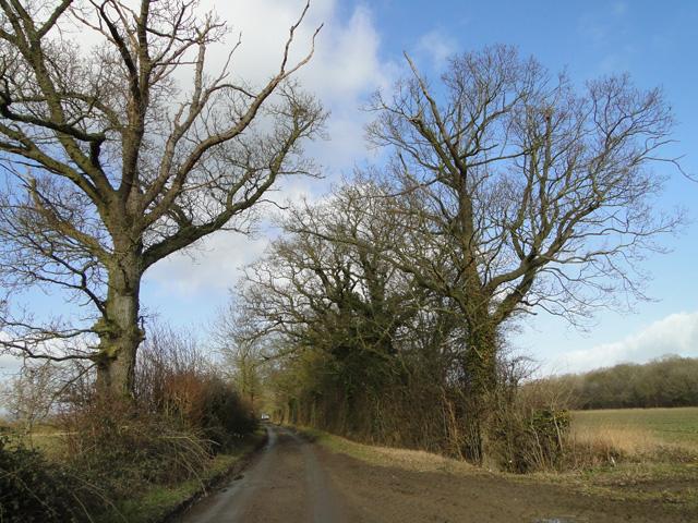 Green Lane, Redenhall