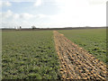 TM2286 : Footpath delineated by weedkiller through the crop by Adrian S Pye