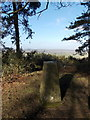 SU0417 : Pentridge: trig point atop Pentridge Hill by Chris Downer