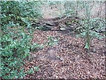 SE0722 : Branch of Elland FP02 by Humphrey Bolton