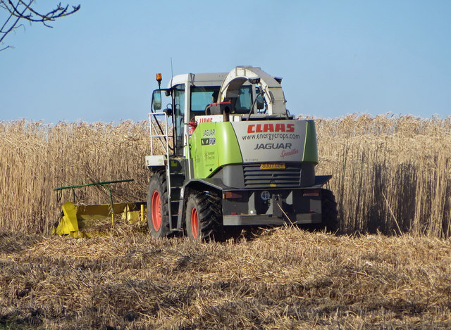Cutting Miscanthus near Bonby
