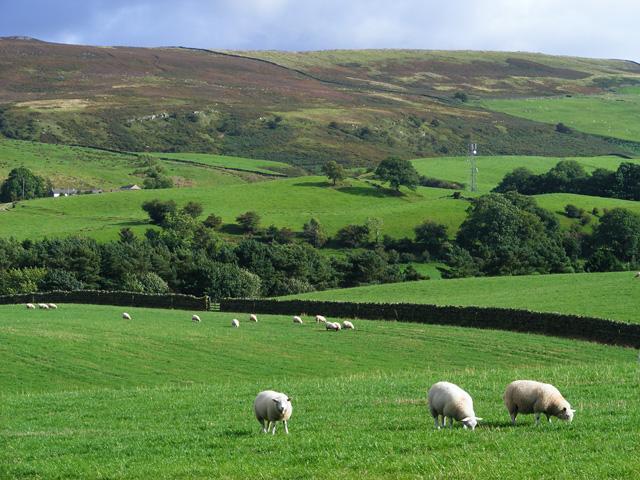 Pasture, Castle Carrock
