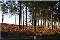 SY9585 : Conifers, Slepe Heath by N Chadwick