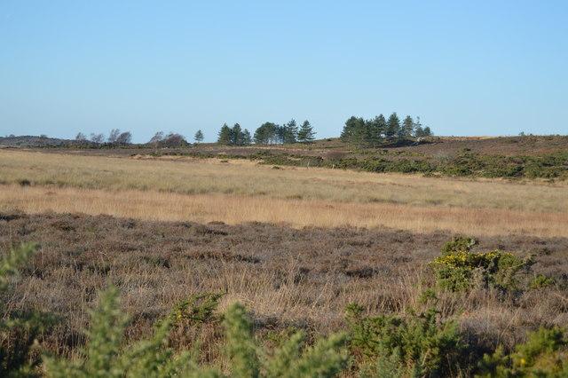 Hartland Moor NNR