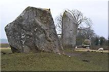 SU1070 : Stones, birds and sheep at Avebury by David Martin