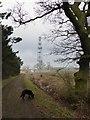 TF0527 : Walking the dog by Bob Harvey
