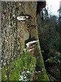 SP9210 : Old bracket fungi by Rob Farrow