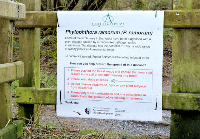 Tree disease sign, Cairn Wood, Craigantlet (February 2015)